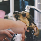 small dog being bathed in a sink.
